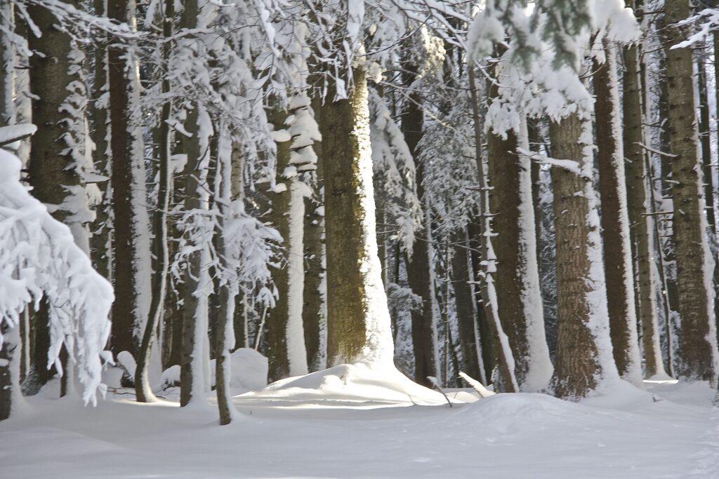 Impressionen Schneeschuhwandern
