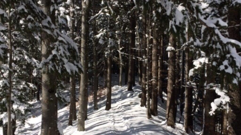 Winterwandern Schattdorf Haldi